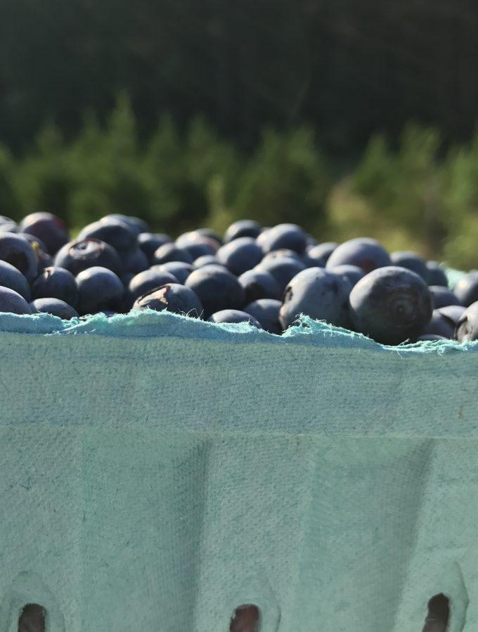 you pick berries milfarm williamsburg va