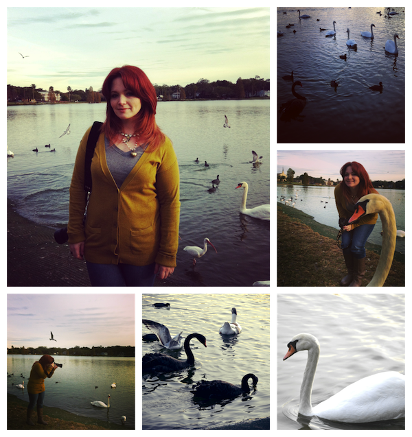 swans collage